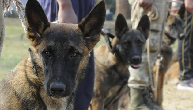 Kolkata Police already has a dog squad associated with the Detective Department. (representational image)(HT File Photo)