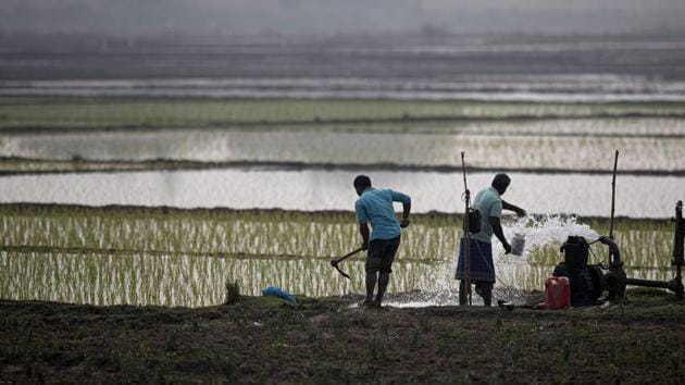 Indian farmers work in a paddy field on the outskirts of Guwahati.(AP)