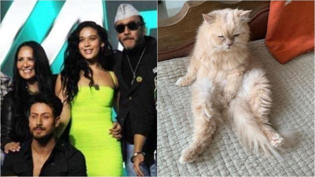 The Shroff family will miss their cat JD.