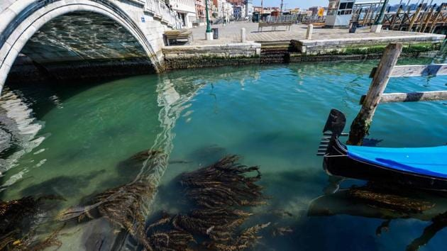 A view shows seaweed in clear waters in Venice on March 18, 2020 as a result of the stoppage of motorboat traffic, following the country's lockdown within the new coronavirus crisis.(AFP)