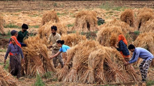 Govt allows farmers to carry out operations amid nationwide lockdown over coronavirus pandemic.(PTI)