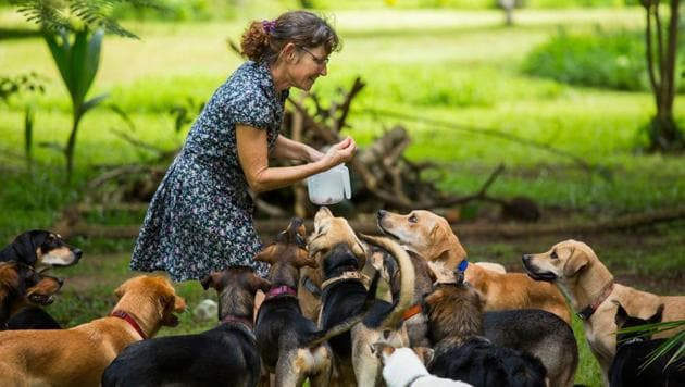 Feeders and animal shelters can now feed stray animals amid lockdown with the help of feeder passes.(Photo: Getty Images)