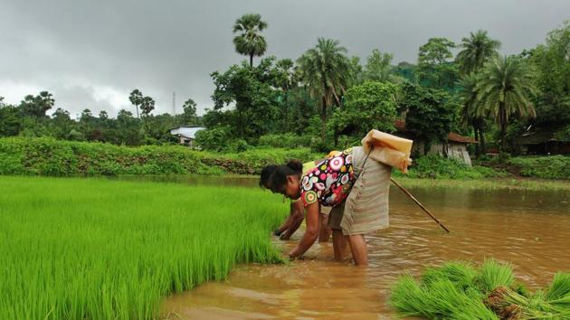 Monsoon is crucial for the cultivation of rice, wheat, sugarcane and oilseeds in the country where farming employs over half of its people.(Praful Gangurde/ HT file photo)