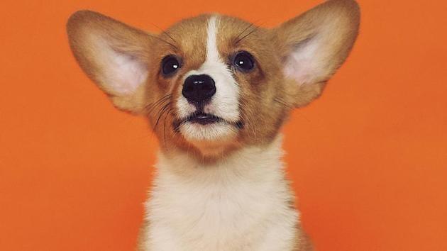 Urban dogs more fearful than their rural counterparts thumbnail