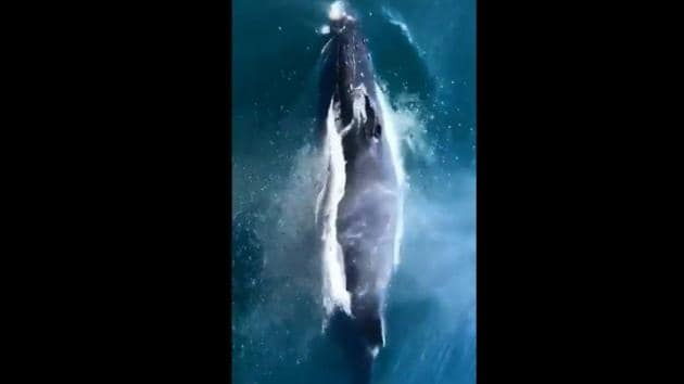 The image shows a whale swimming through water.(Screengrab)
