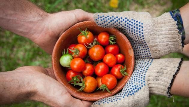 Coronavirus lockdowns are pushing more city dwellers to grow fruit and vegetables in their homes, providing a potentially lasting boost to urban farming, architects and food experts said on Tuesday.(UNSPLASH)
