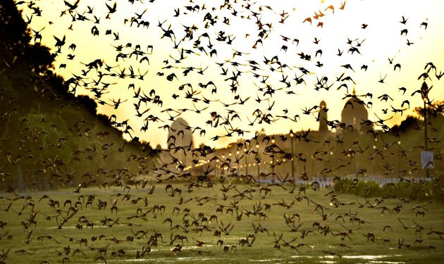 The resurgence of nature in the city: New Delhi during the lockdown.(Arvind Yadav/HT PHOTO)