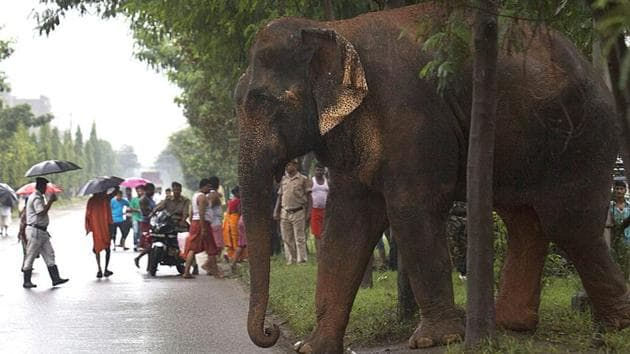 The lockdown has ensured has ensured that there is virtually no vehicular traffic through the Corbett National Park which can antagonise elephants.(Representative photo/AP)
