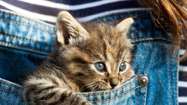 In these times, it is imperative that pet parents tap the right resources and make choices that could help fight the scarcity.