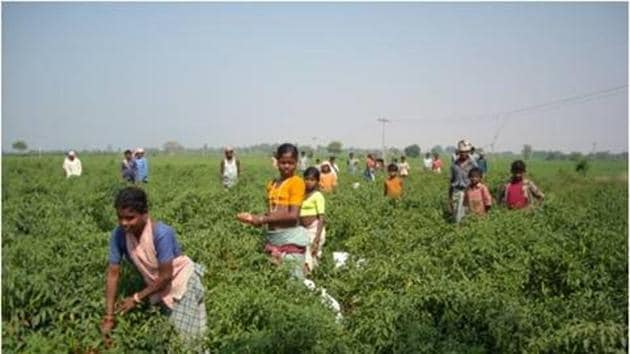 The workers in Telangana and Andhra Pradesh are going back to their homes in Chhattisgarh and Odisha on foot, crossing through forests and Maoist-controlled areas.(HT Phoro)