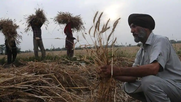 Since the lockdown has disrupted traditional farm-to-fork supply chains, the void created has enabled the government to quickly move in with reforms to keep supplies going.(Bharat Bhushan / Hindustan Times)