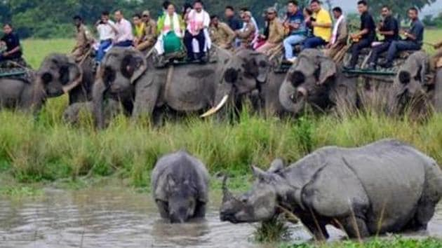 Kaziranga gets flooded every year forcing the animals in the national park to move towards hills in Karbi Anglong district.(PTI Photo)