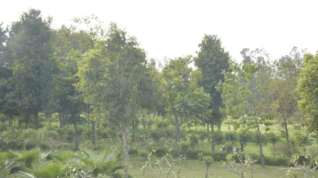 Environmentalists and local residents are now concerned that the same ecological value cannot be recreated through artificial plantations in fragmented patches of land.(HT file photo. Representative image)