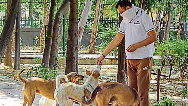 A man feeds stray dogs at a park in New Delhi.