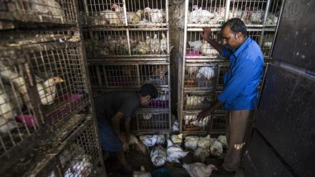 From the moment they are born, these birds spend all their lives in total confinement. Broiler chickens are born in large incubators with hundreds of others; crammed into small, often filthy spaces(Pratik Chorge/HT Photo)