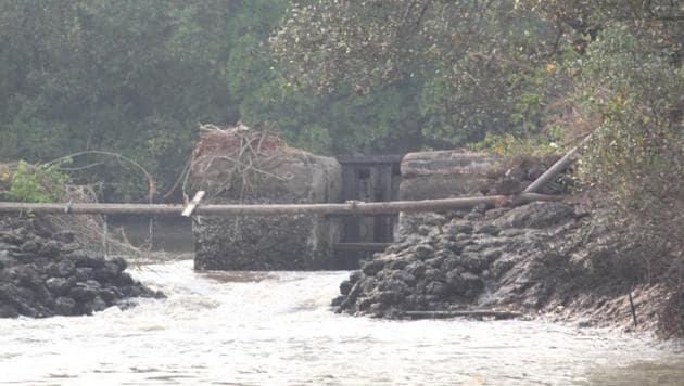 A breached bund in a khazan land area in Goa.(HT PHOTO)