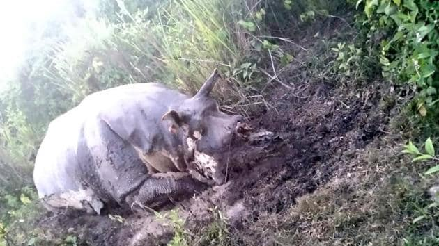 This is the first instance of rhino poaching in Kaziranga this year.(Sourced)