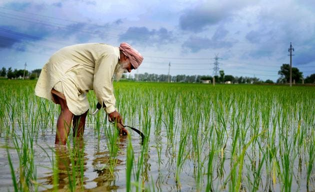 (A farmer had submitted a written complaint to the Ludhiana deputy commissioner stating that he was sold seeds of PR 128 paddy seeds at Rs 200 per kilogram.)