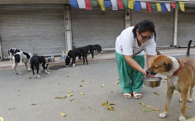 A woman feeds stray dogs during lockdown. (representative image)(HT PHOTO)