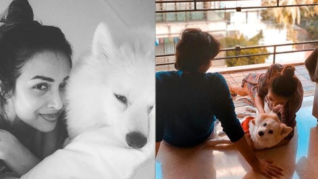 Malaika Arora has shared a new picture with son Arhaan Khan and dog Casper.