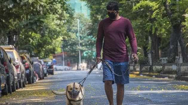 The organisation had so far rescued over 40 such dogs from different parts of the city and sent them to shelter homes in the outskirts of Pune.(Pratik Chorge/HT Photo)