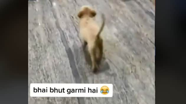 The image shows the dog in question.(TikTok/rajputking568)