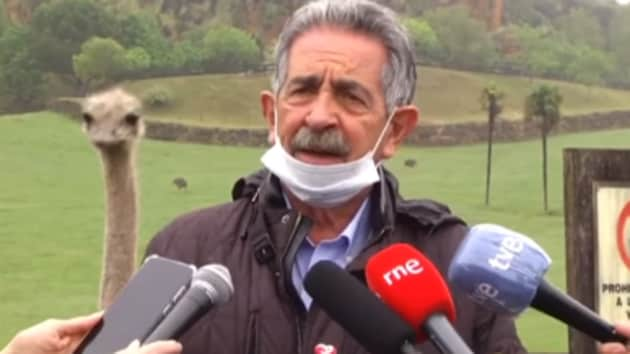 The image shows the ostrich peeking from behind the politician.(Facebook/Miguel Ángel Revilla)