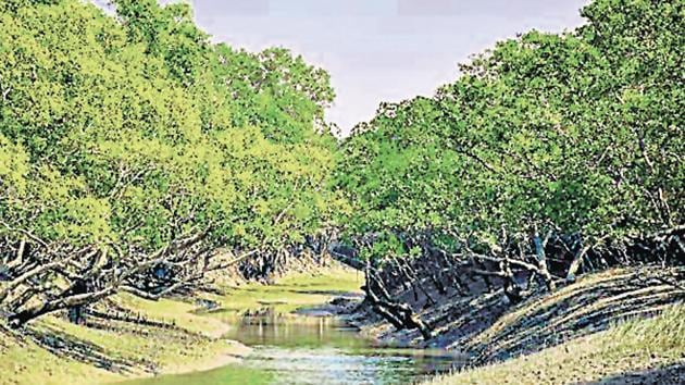 Located at the southern tip of Bengal at the mouth of the sea, the dense mangrove is known to protect human settlements including the city of Kolkata, acting as a shield against cyclones.(GETTY IMAGES.)