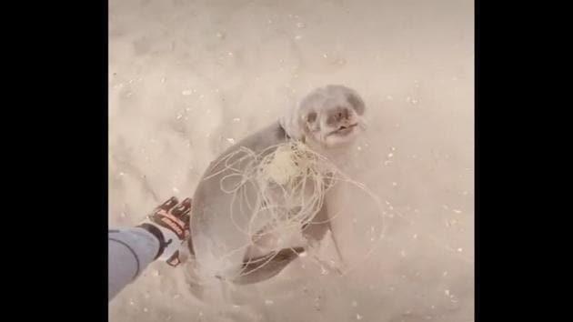 The seal had a piece of string stuck on its neck.(TikTok/@namib_naude)