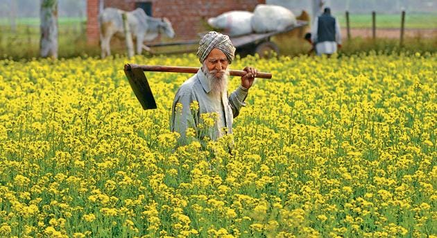 The Punjab cabinet had on Wednesday agreed in-principle to switch from free electricity to cash transfer of subsidy to farmers' bank accounts from the next fiscal to become eligible for additional borrowing under reforms-linked enhancement announced by the central government.(HT PHOTO)