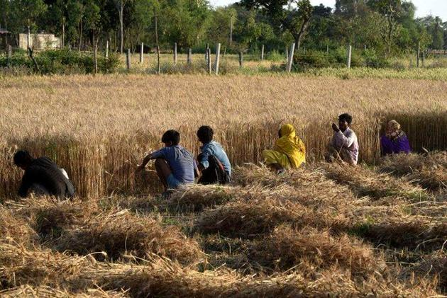 Referring to a recent set of guidelines issued by the state government following the May 9 order, Selja and Surjewala said the state government's soft-worded guidelines that spoke of encouraging farmers to undertake crop diversification voluntarily showed that it was a damage control move to offset the backlash by farmers.(Representative Image)