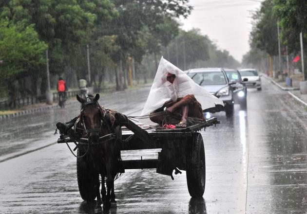A horse-cart and its driver make their way through the rain at Sukhna Lake Road in Chandigarh on Friday.(Ravi Kumar/HT)