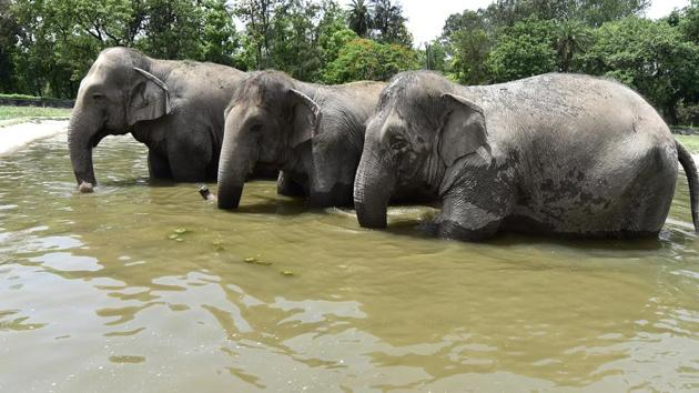 The zoo spends about ₹30 lakh a month on meat, fodder, grains, fruits and vegetables for the animals.(HT File Photo)