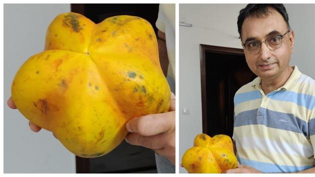 Kamal Jit Singh, found a star-shaped papaya and it helped him revive lost friendships!