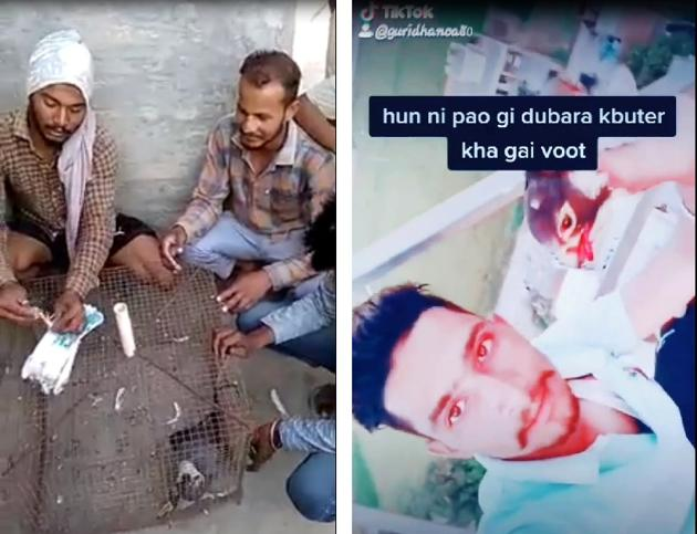 Gurprit Singh and Nirmal Singh from Sandoha village with a migratory falcon trapped in the cage and (right) Gurvinder Singh of Gharuan village wrenches off a falcon's head.(VIDEO GRABS / TIKTOK & WHATSAPP)