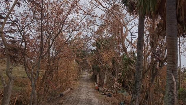 The effect, an MLA said, is less on mangroves and more on the other trees, such as mango, banyan, jambul, neem, and jackfruit. Leaves of almost all trees on the land are turning yellow or red.(HT Photo)