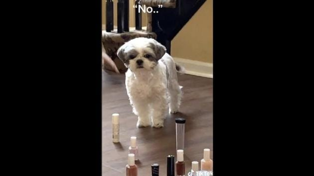 The camera zooms into the doggo's face and its expression is worth a thousand words.(TikTok/@jason_lee215)