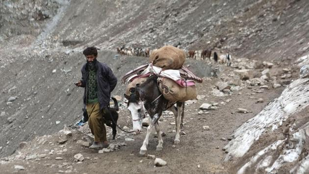 A Bakarwal nomad, accompanied by a mule and a trusty Bakharwal guard dog, leads the way as a group make their way from towards alpine meadows for the summer months. (Waseem Andrabi / HT Photo)