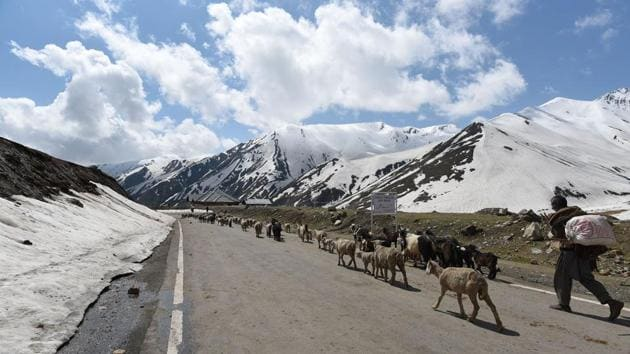With the winter snows melting, Bakarwal herds will become a frequent sight in the coming months around the Kashmir Valley and its higher reaches. Making their way around Jammu and Kashmir as the weather turns colder, they will eventually follow age-old routes towards the plains in Jammu as winter's chill approaches. (Waseem Andrabi / HT Photo)