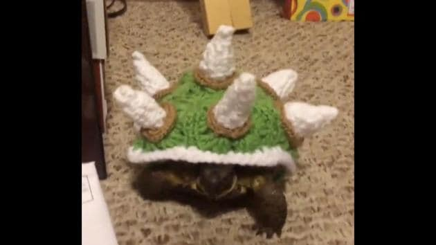The picture shows a little tortoise in a crocheted sweater that covers its shell.(Reddit/@mtlgrems)
