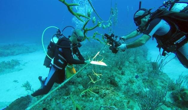 Divers check a coral reef being raised for research by the National Aquarium of Cuba in Havana, Cuba, June 4, 2020. Picture taken on June 4, 2020. REUTERS/Stringer(REUTERS)
