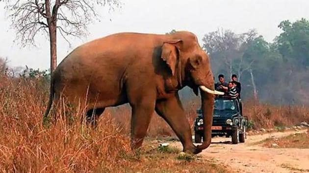 Earlier on Tuesday and Wednesday, two female wild elephants were found dead in separate spots in the jungles of the Pratapur forest range of Surajpur district.(HT photo)