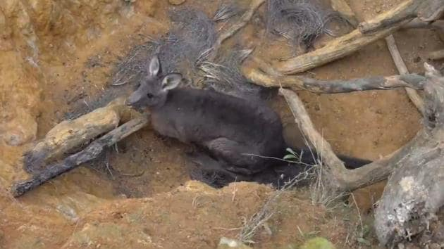 The kangaroo inside the mine shaft.(Facebook/Five Freedoms Animal Rescue)