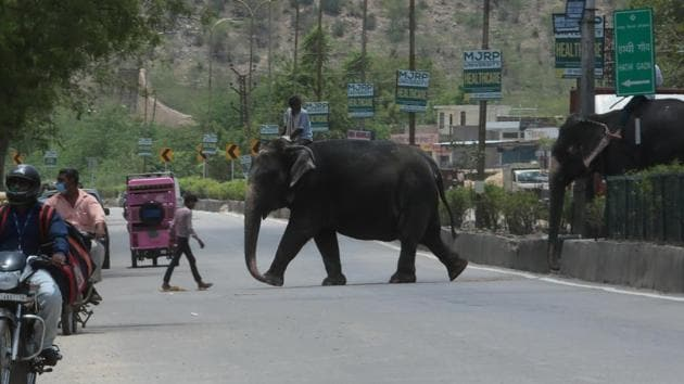 There have been several incidents of elephants killing humans in Uttarakhand in the recent past.(HT Photo/Representative)