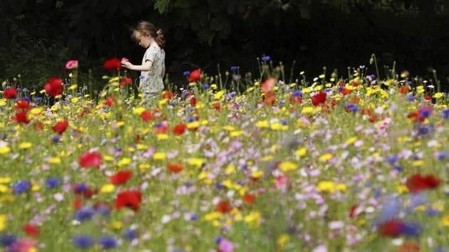 Three-year old Anna May Byrne plays in a field of wild flowers on Dublin's northside, Ireland, as the sun shines on this years summer solstice, Saturday June 20, 2020. (AP/Brian Lawless)