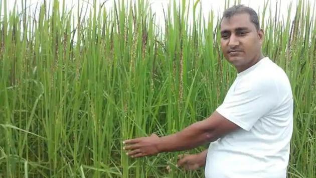 Farmer Ravi Prakash Maurya with his crop of black rice in Prayagraj, Uttar Pradesh.(File photo)