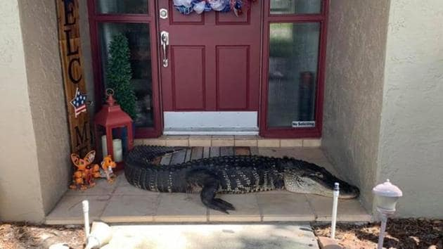 The alligator blocking the door of the house.(Facebook/Croc Encounters)