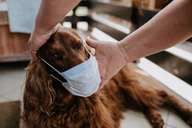 Owners need to take responsibility for their pets.(Getty Images/iStockphoto)