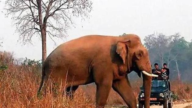 The National Board for Wildlife is considering diversion of 98.59 ha of reserve forestland from Assam's Dehing Patkai Elephant Reserve for Tikok opencast coal mining project by North-Eastern Coal Field, a unit of Coal India Limited.(HT File / Photo used for representational purpose only)