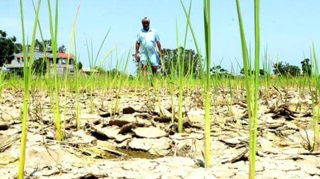 A drought had affected over 7 lakh farmers in 55 blocks across seven districts in Jharkhand in 2019.(Representative image/HT PHOTO)